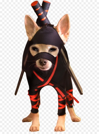 Chihuahua in ninja costume